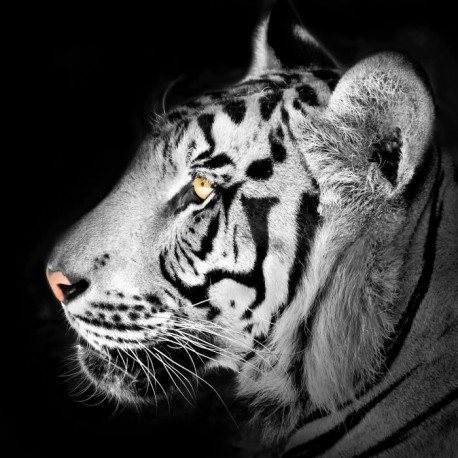 IMAGINE Profil Tigre Toile - 30X30